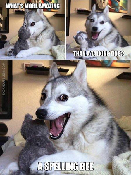 Dog Puns (10 pics)