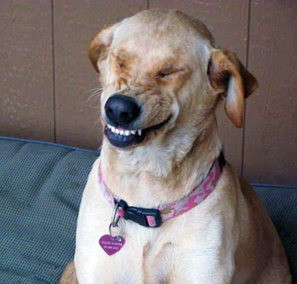 Sneezing Dogs (21 pics)