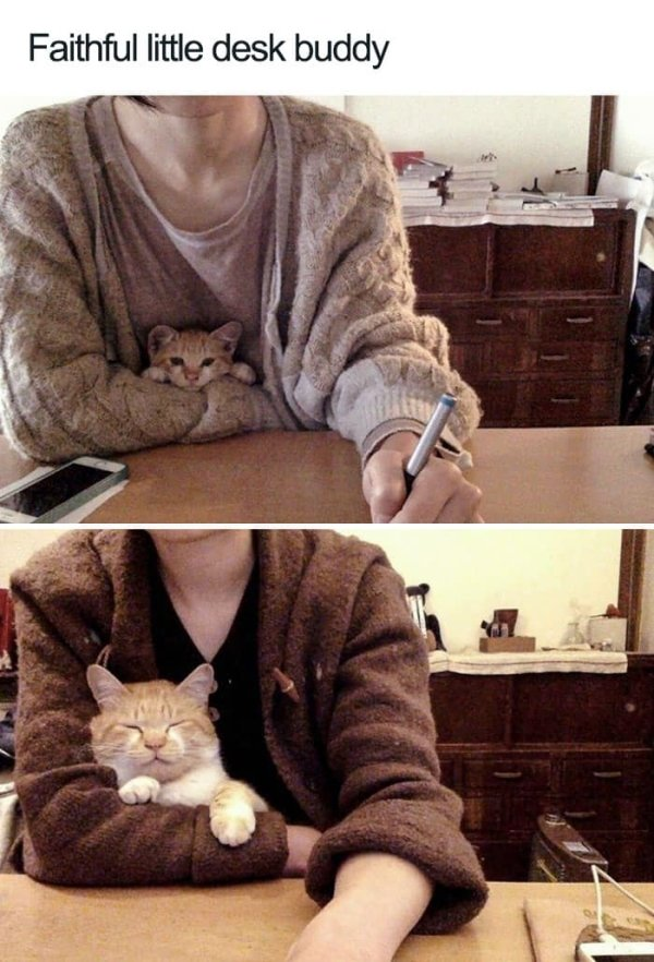Why We Love Cats (29 pics)