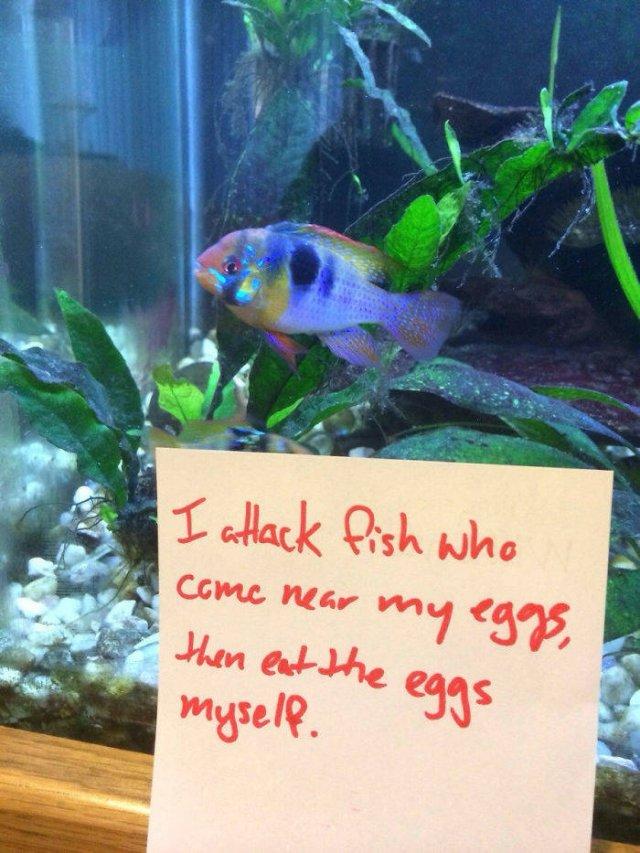 Fish Shaming (23 pics)