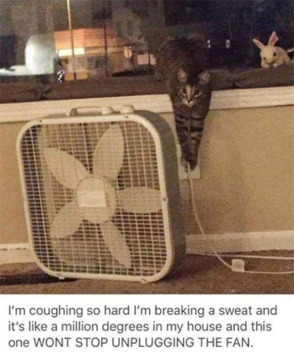 When Animals Behave Bad (23 pics)