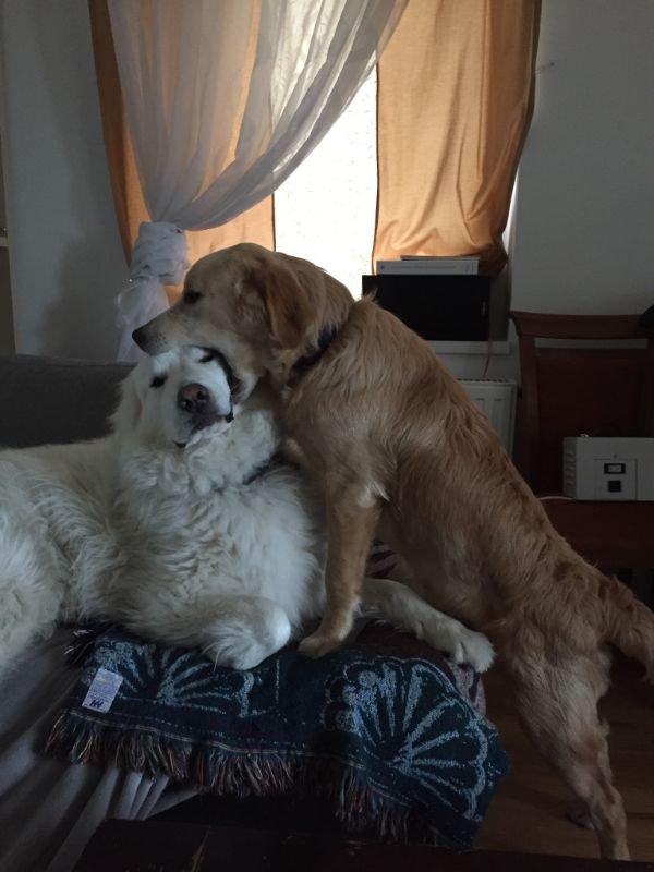 When Animals Behave Bad (23 pics)