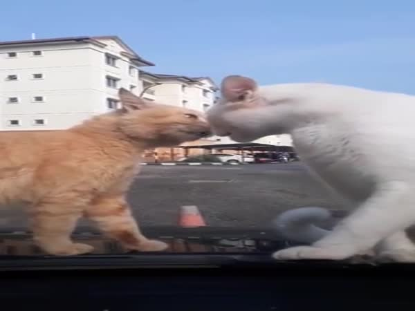 Can't You Fight Somewhere Else?