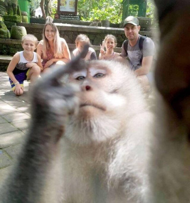 It Was Supposed To Be A Great Photo But Something Came In Between (17 pics)