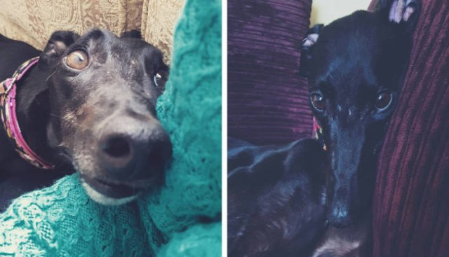 Owners And Pets Share Their Moments (23 pics)