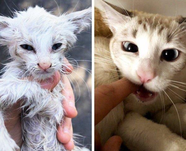 Rescued Animals (24 pics)