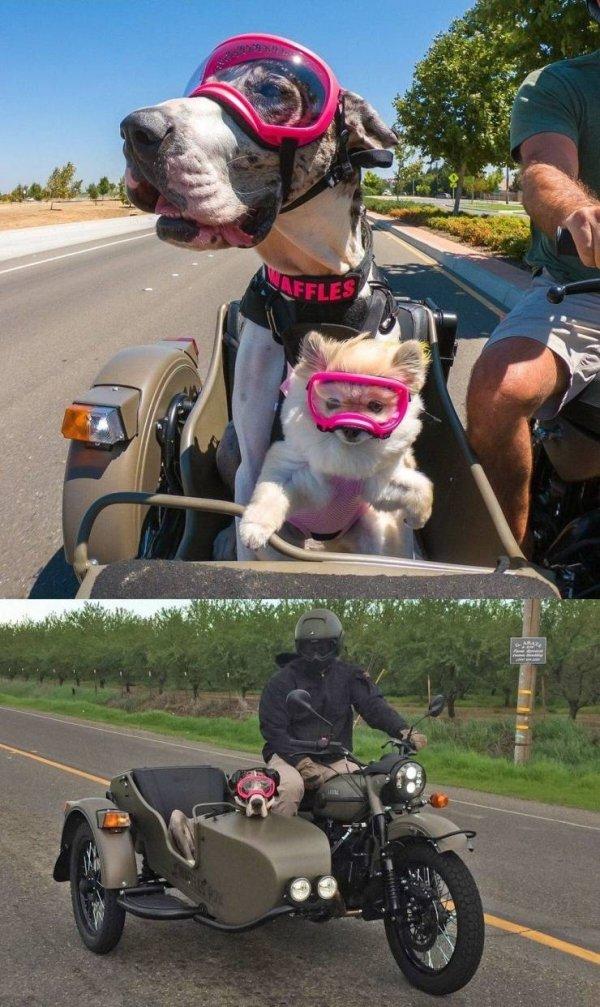 Funny Animals (57 pics)