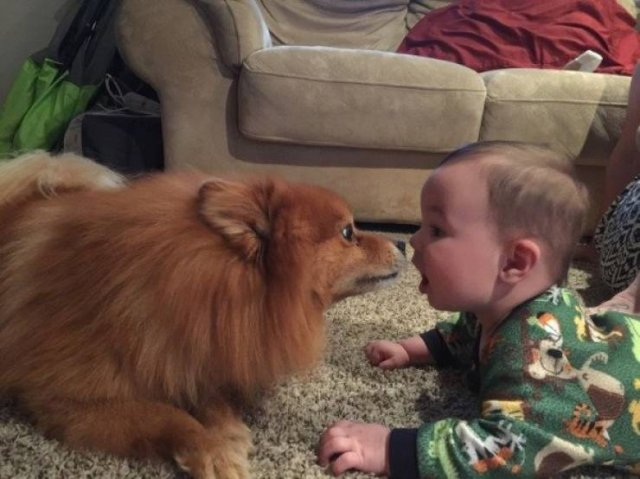 Kids Are The Best (24 pics)