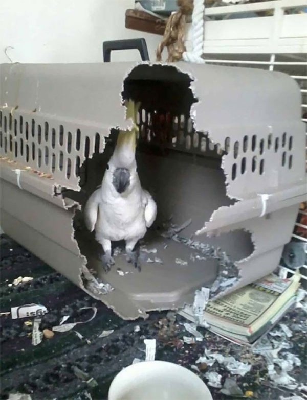 Birds Are Bad (33 pics)