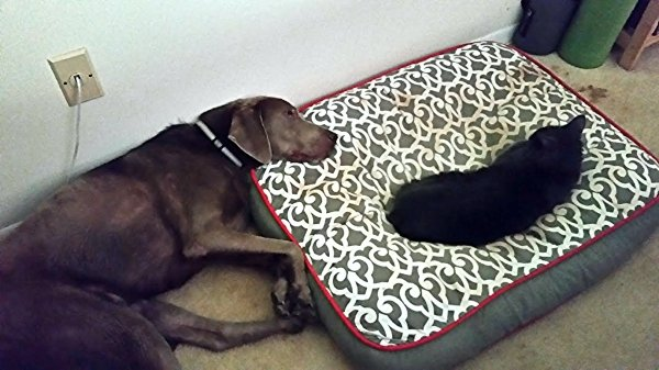 Cats Stealing Dog Beds (27 pics)