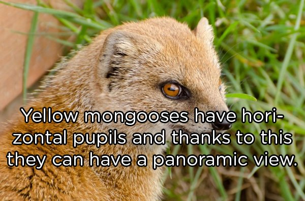 Interesting Facts About Animals (25 pics)