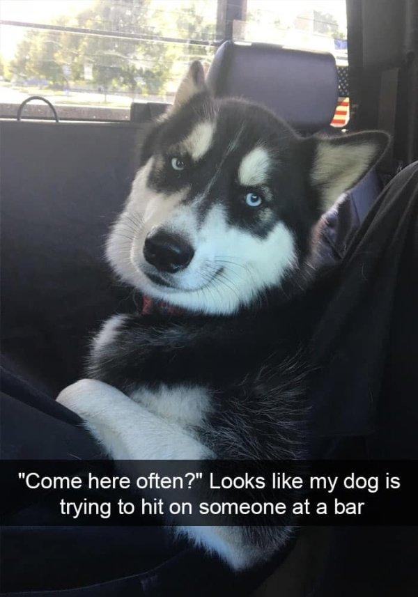 Dogs of Snapchat (30 pics)