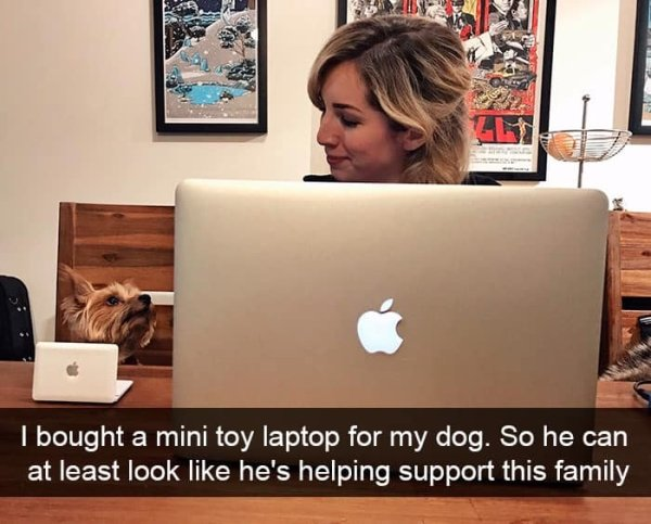 Dogs of Snapchat (30 pics)