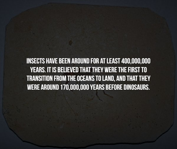 Creepy Facts About Insects (15 pics)