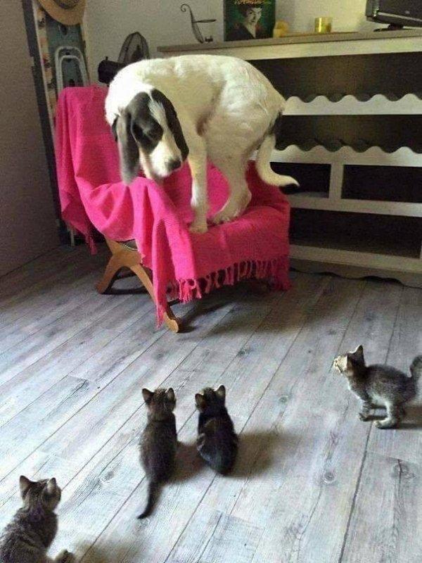 Cats Vs Dogs (26 pics)