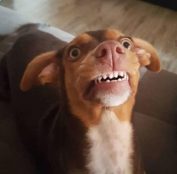 Dog Steals Grandma's Dentures (6 pics)