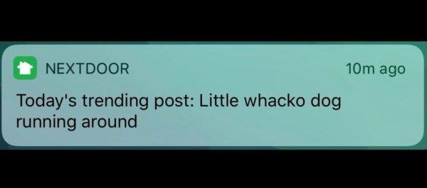 Funny And WTF NextDoor Posts (33 pics)