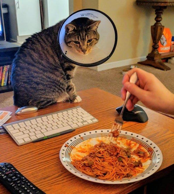 Animals Looking At Food (32 pics)