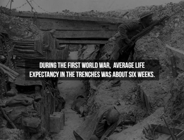 Facts About Wars (25 pics)