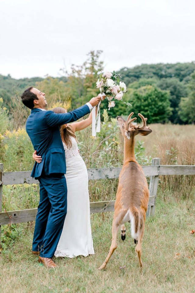 A Wedding Photoshoot Interrupted (16 pics)