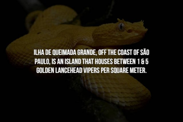 Scary Facts (15 pics)
