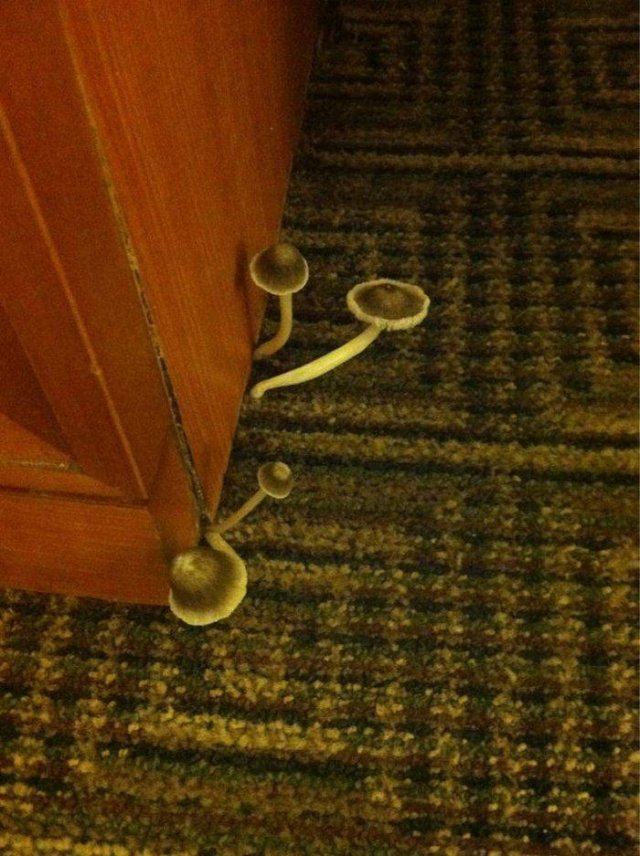 These Hotels Are Really Bad (40 pics)