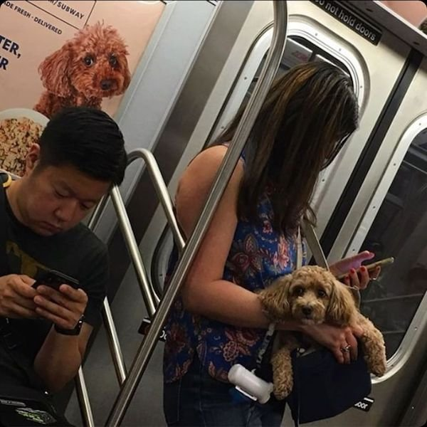 Commuters Who Look Like their Surroundings (31 pics)