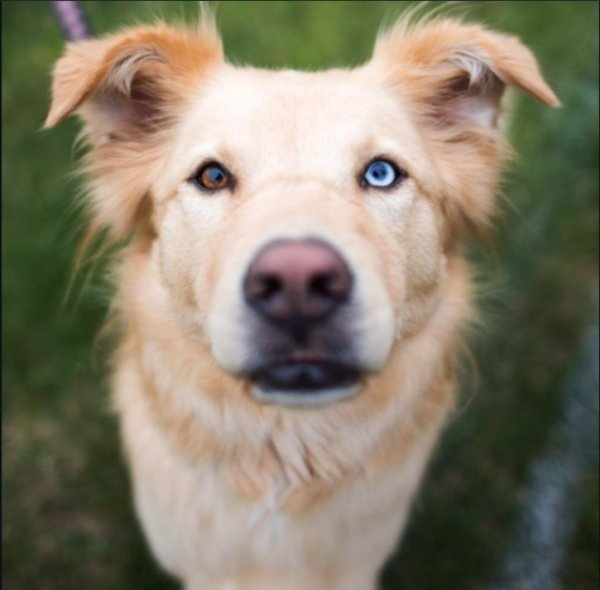 Beautiful Dog Breeds (32 pics)