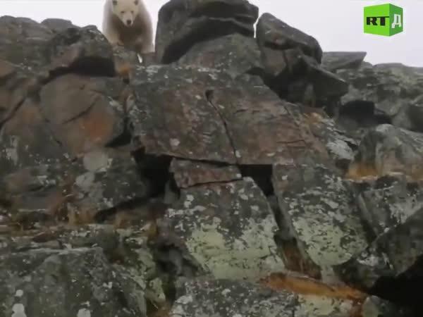 Look, A Bear