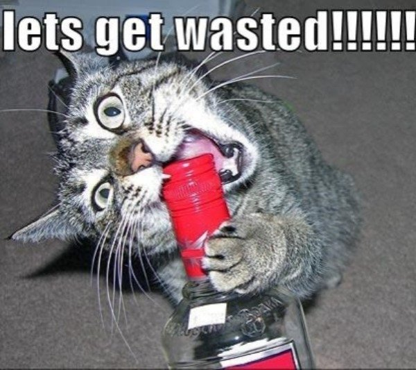 Got Wasted (27 pics)