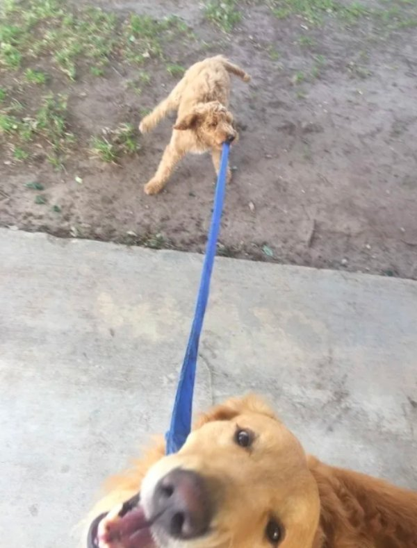 Dogs Can Be So Weird (30 pics)