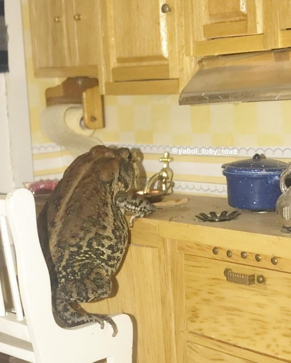 The Life Of Toby the Toad (30 pics)
