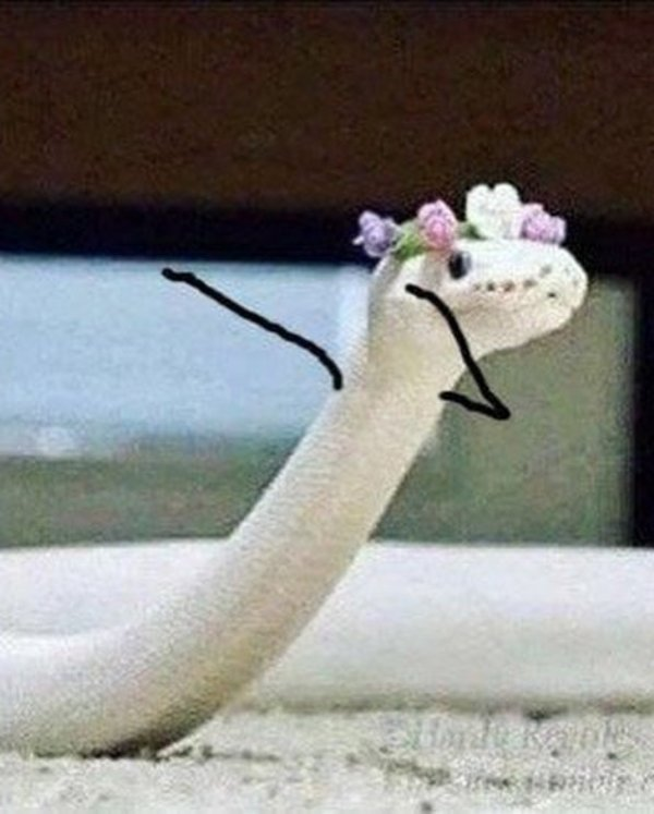 Snakes With Arms Are Hilarious (21 pics)