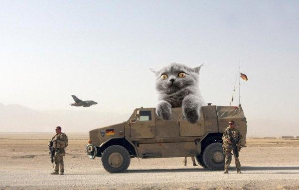 Military Equipment + Giant Cats (39 pics)