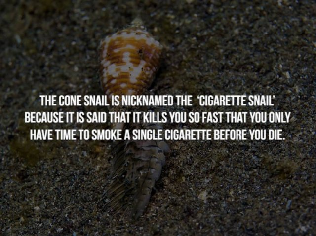 Scary Animal Facts (15 pics)