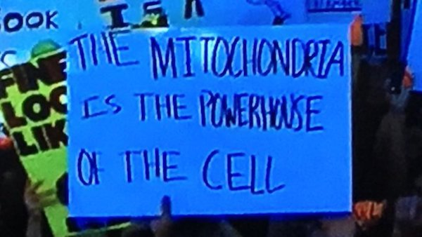College GameDay Signs (25 pics)