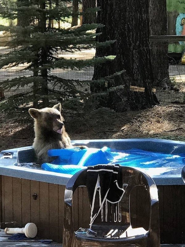 Funny Animals (67 pics)