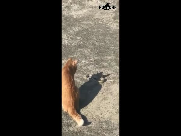 Fearless Cat