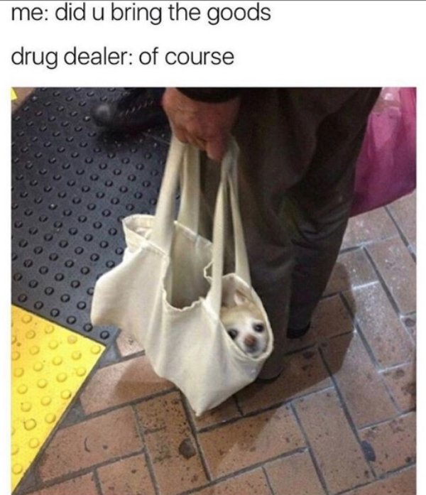 Dog Memes (28 pics)