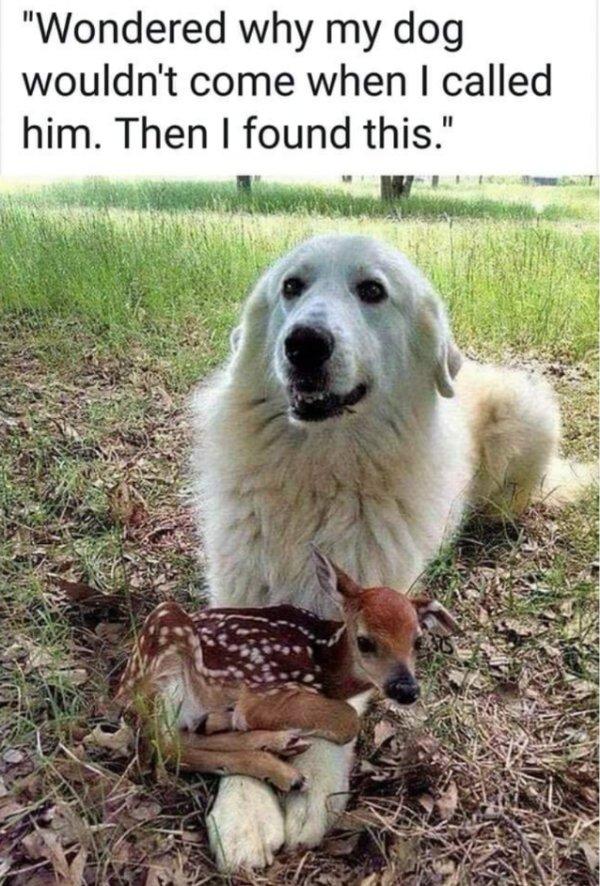 These Amusing Pets (55 pics)