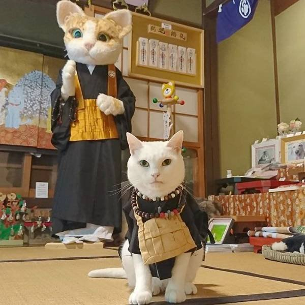 Cat Shrine In Japan (30 pics)