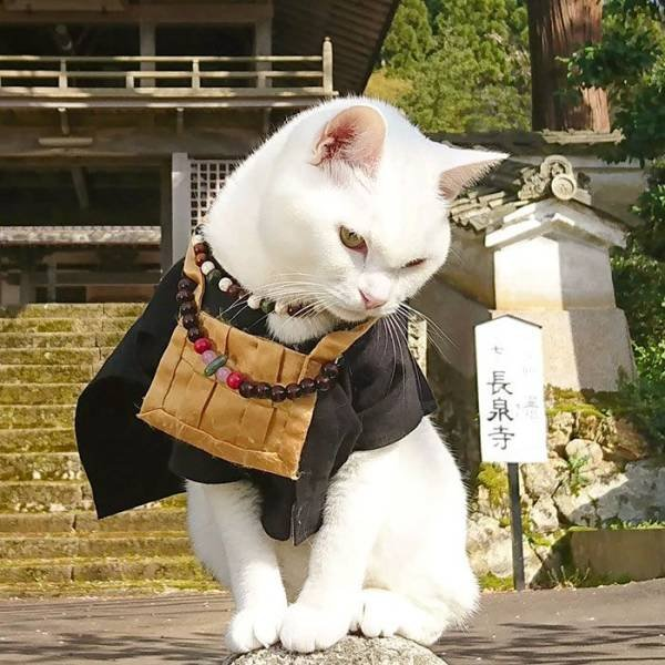 Cat Shrine In Japan (30 pics)