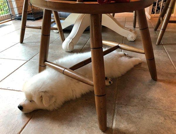 Dogs Can Sleep Everywhere (36 pics)