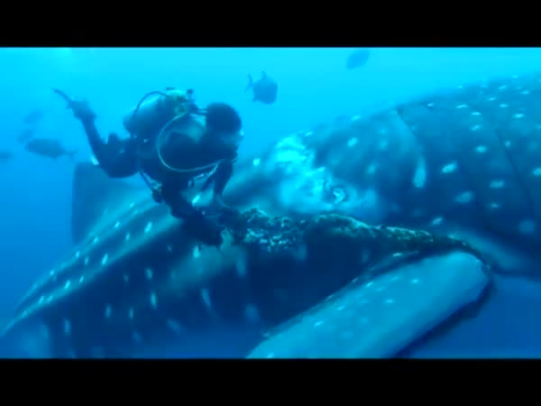 Whale Shark Needs Help