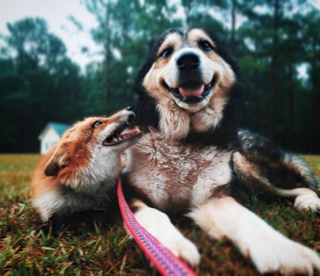 True Friendship (24 pics)