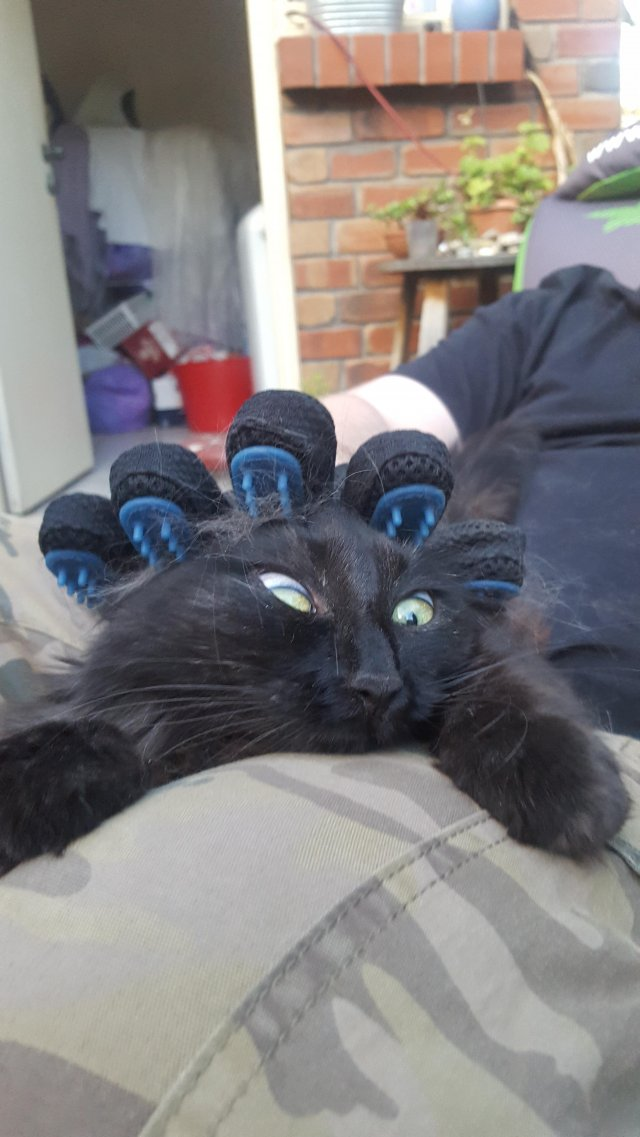 This Post Is About Cats (29 pics)