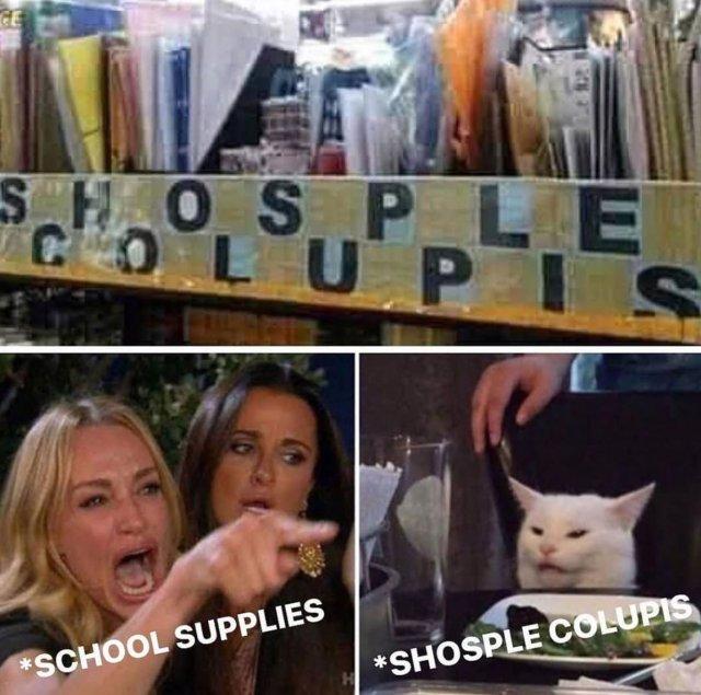 """Woman Yelling at a Cat"" Memes (35 pics)"