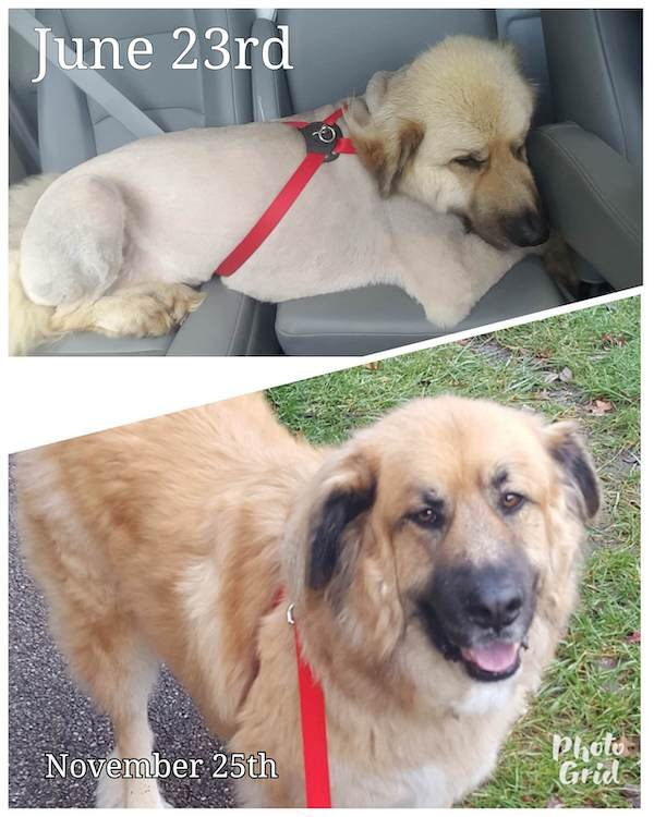 Photos Of Dogs Before & After Their Adoption (32 pics)
