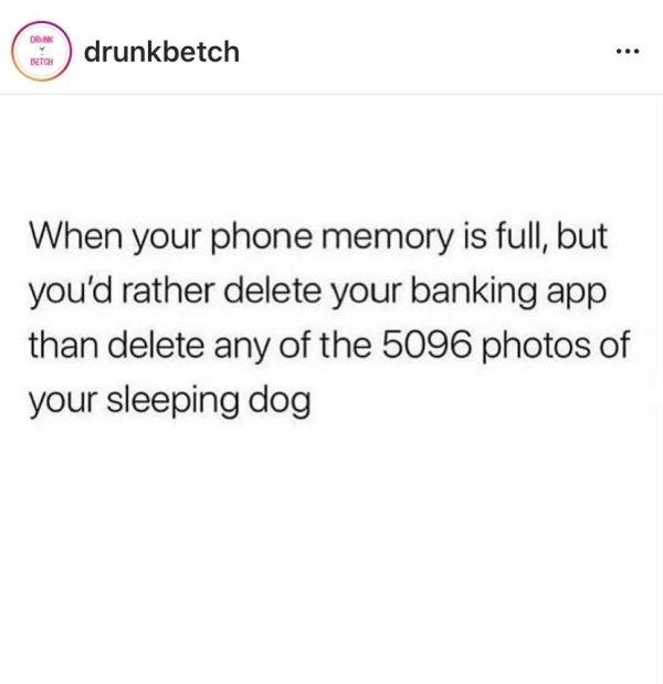 Pets Memes (26 pics)