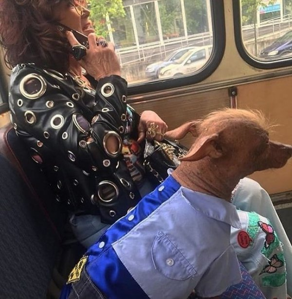 Funny And Strange Things On The Public Transport (45 pics)